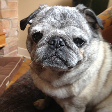 Doggielama_pug_friend